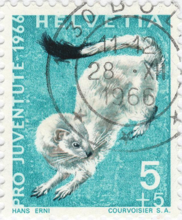 SBK J215 (Mi. 845), Hermelin J215_211