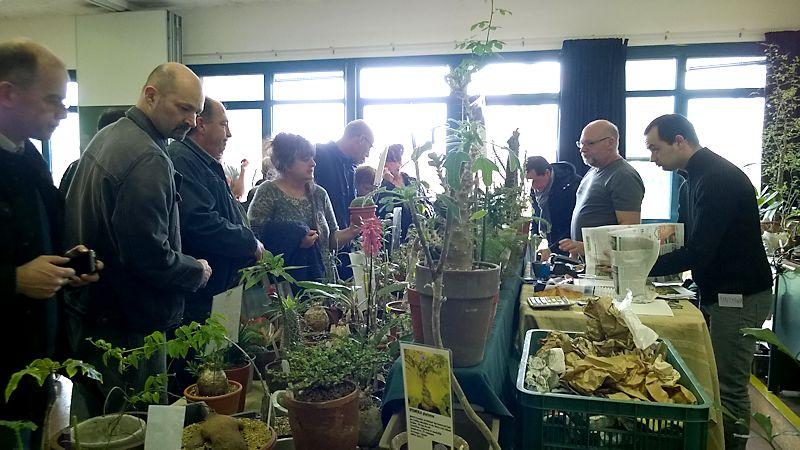 Expo Vente à Edenia en région parisienne, 26 et 27 mars 2016, Cergy Pontoise 95  Plante10