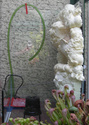 Réalisation d'un terrarium paysagé pour plantes carnivores Mousse14