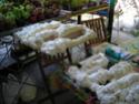 Réalisation d'un terrarium paysagé pour plantes carnivores Mousse15