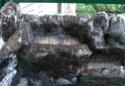 Réalisation d'un terrarium paysagé pour plantes carnivores Resine16