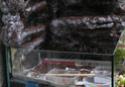 Réalisation d'un terrarium paysagé pour plantes carnivores Resine17