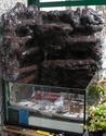 Réalisation d'un terrarium paysagé pour plantes carnivores Resine18