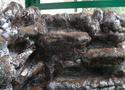 Réalisation d'un terrarium paysagé pour plantes carnivores Resine19