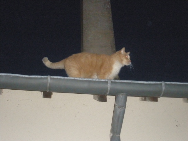 mes chats de gouttières vus de gouttieres 07040912
