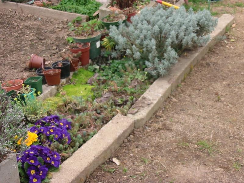 le jardin de jojo 109-0921