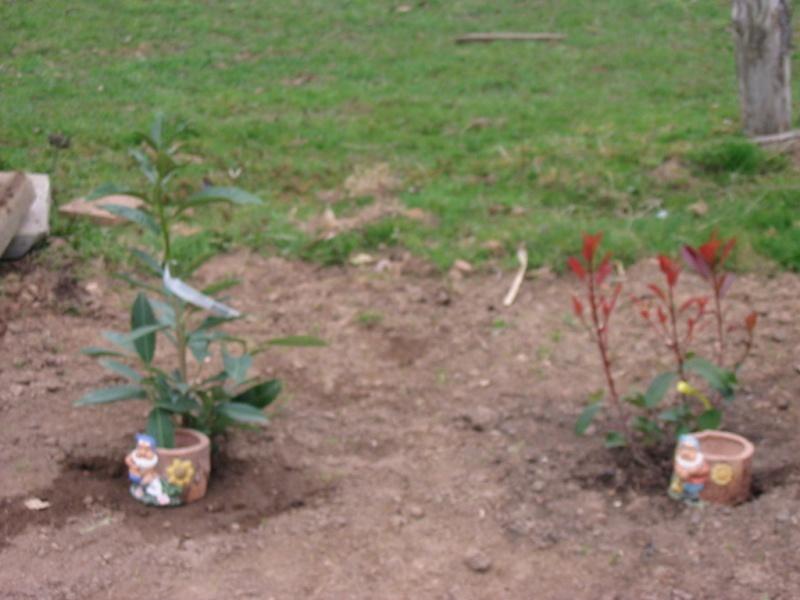 le jardin de jojo 109-0923