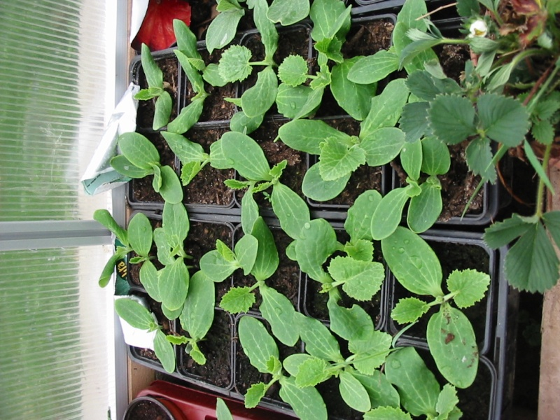 le jardin de jojo 109-0930