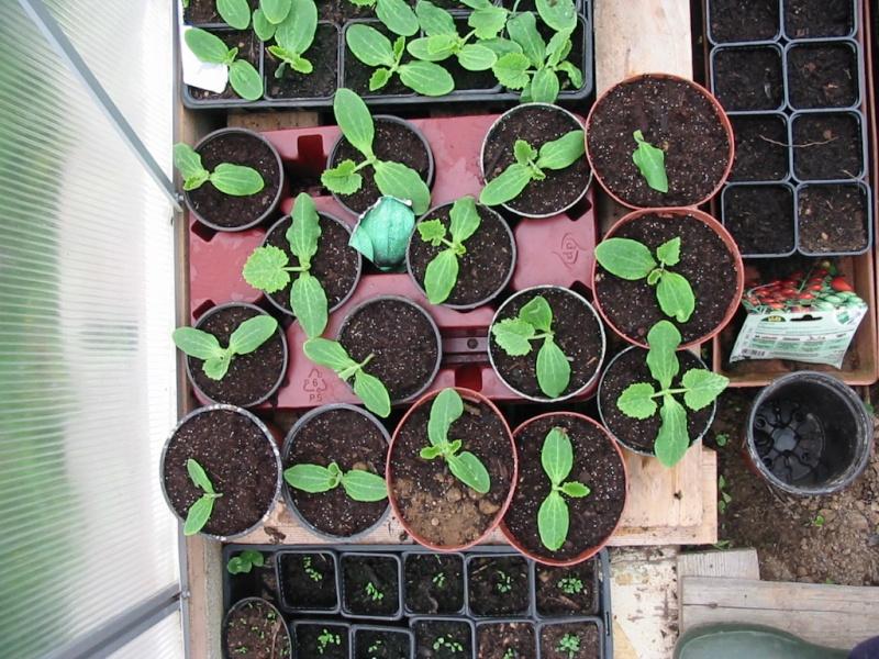 le jardin de jojo 109-0931