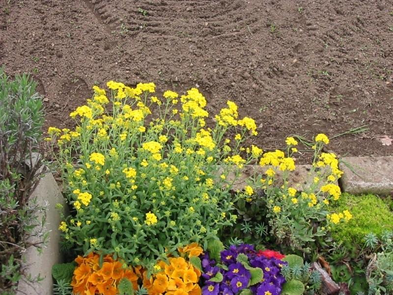 le jardin de jojo 110-1028