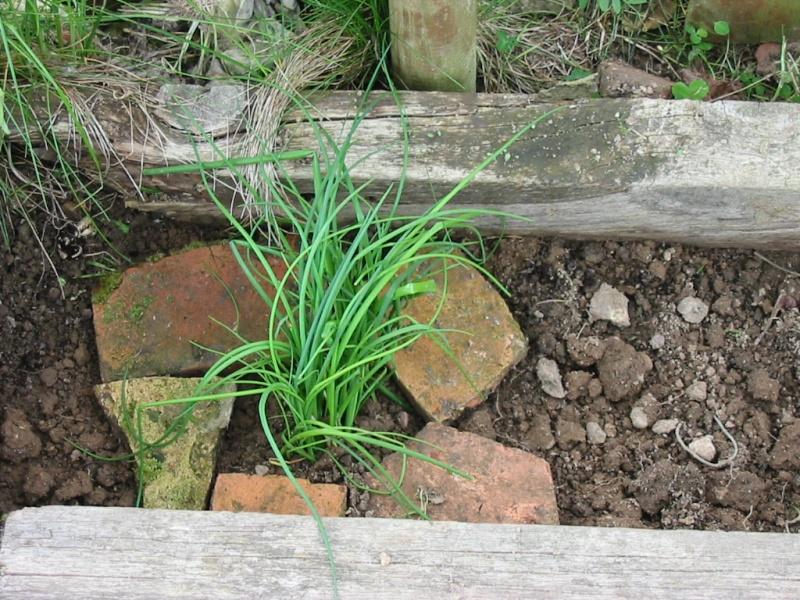 le jardin de jojo 110-1033