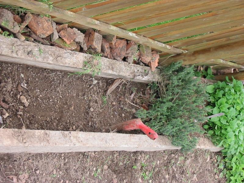 le jardin de jojo 110-1036