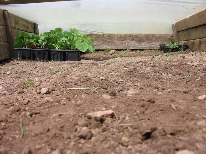 le jardin de jojo 110-1051