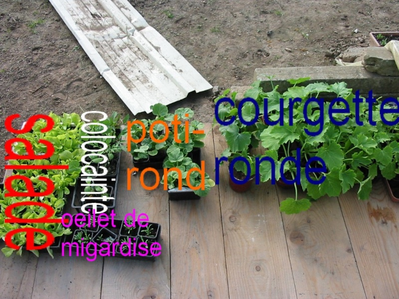 le jardin de jojo 110-1060