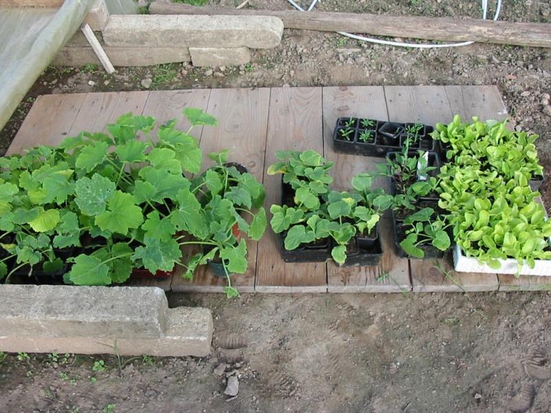 le jardin de jojo 110-1061