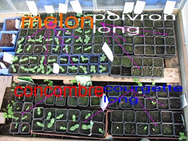 le jardin de jojo 110-1062