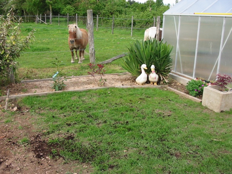 le jardin de jojo 110-1067
