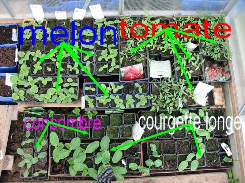 le jardin de jojo 110-1073
