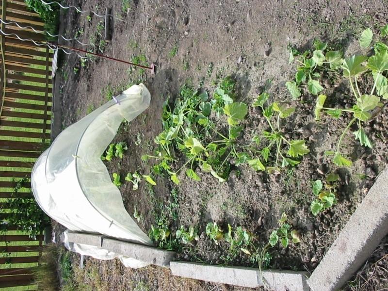 le jardin de jojo 111-1112