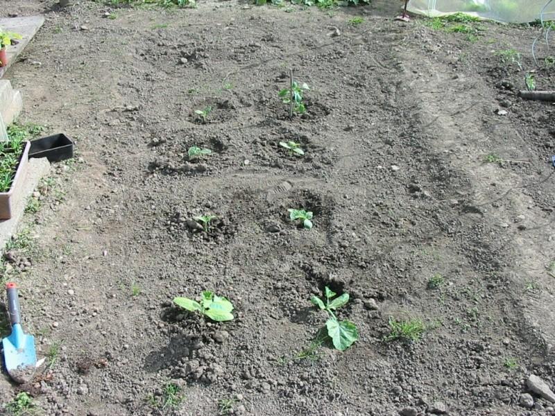 le jardin de jojo 111-1113