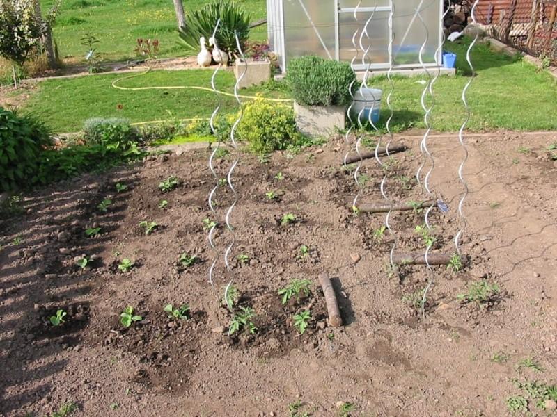 le jardin de jojo 111-1114