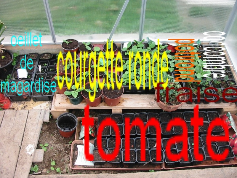 le jardin de jojo Semis10