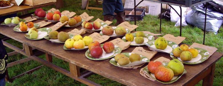 Fête de la pomme, du miel et des champignons Imgp8611