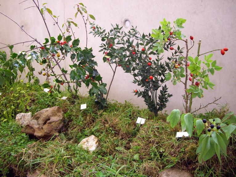 Fête de la pomme, du miel et des champignons Imgp8619
