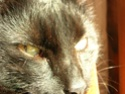 Mon petit Lilou adoré 24710