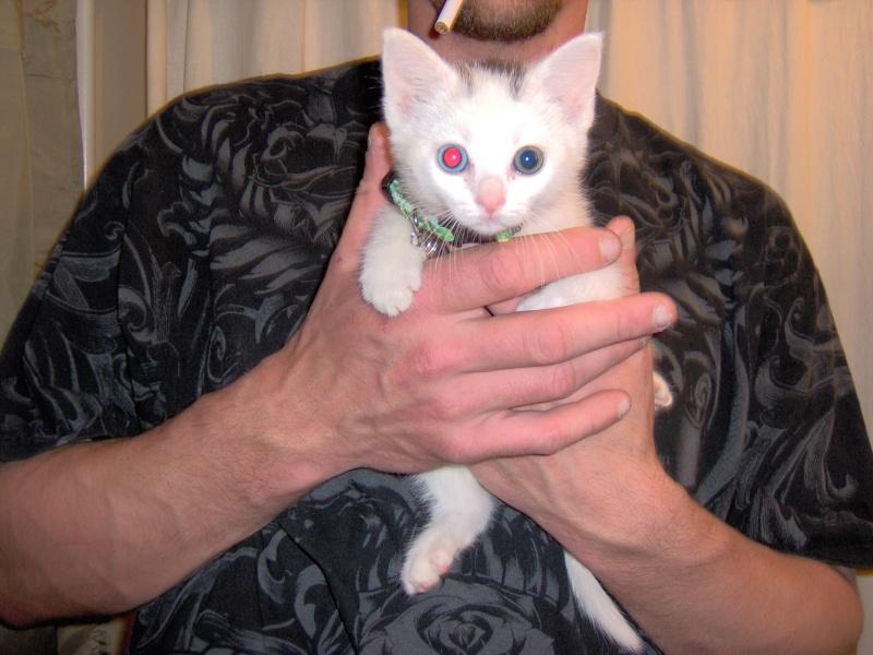 New Putty Cat!!!  UPDATE Cat_0012