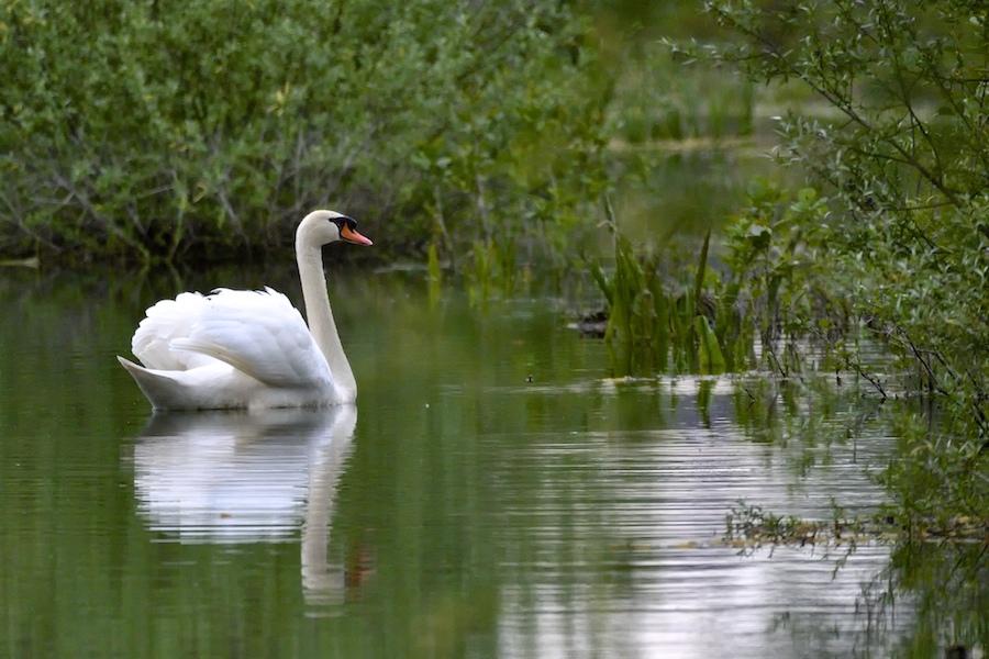 Sur les étangs de Cattenom _dsc0110