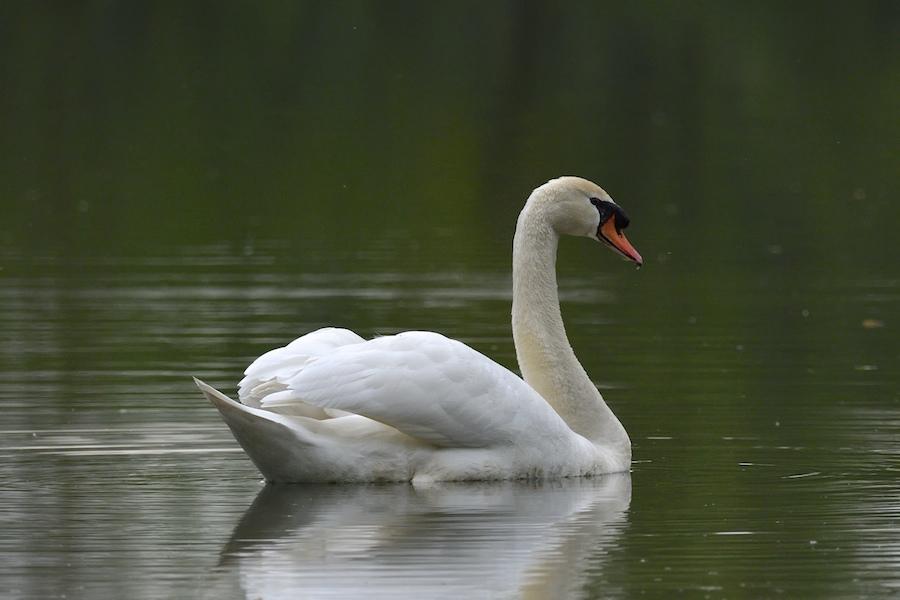 Sur les étangs de Cattenom _dsc0111