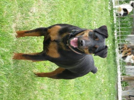 KUGA femelle type jagd terrier 7 ans et demi Img_0817
