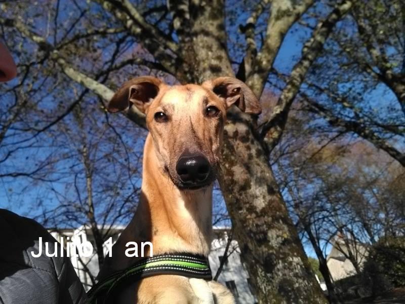 Nos loulous Scooby France, en Famille d'accueil  10426710