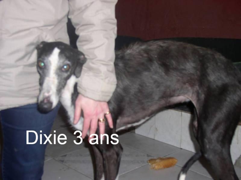 Nos loulous Scooby France, en Famille d'accueil  11140310