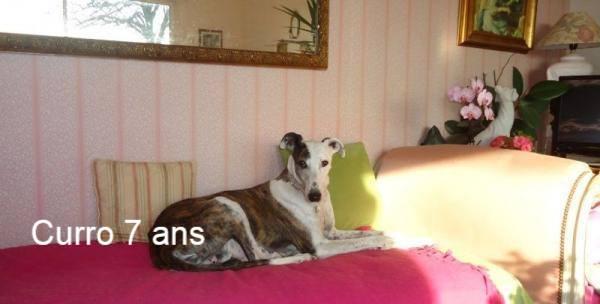 Nos loulous Scooby France, en Famille d'accueil  12524210
