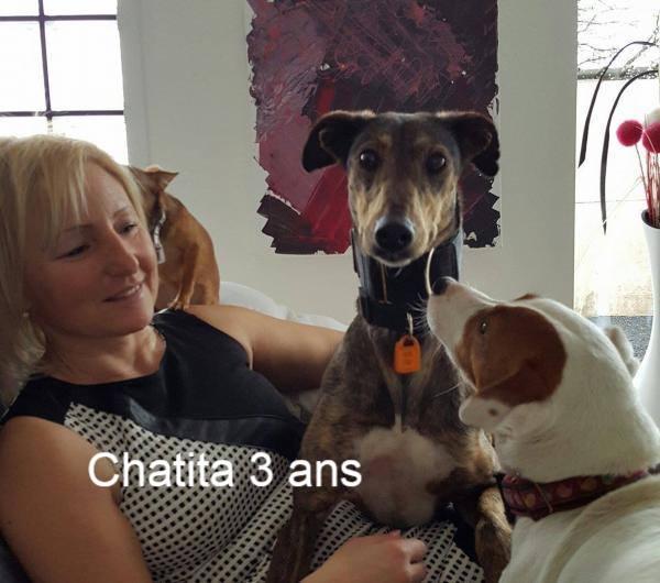 Nos loulous Scooby France, en Famille d'accueil  12718010