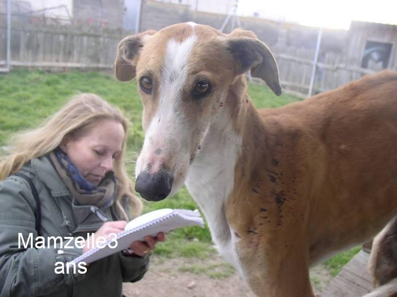 Nos loulous Scooby France, en Famille d'accueil  12928310