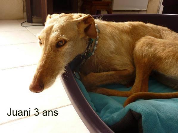Nos loulous Scooby France, en Famille d'accueil  12932610