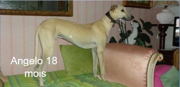 Nos loulous Scooby France, en Famille d'accueil  12961610