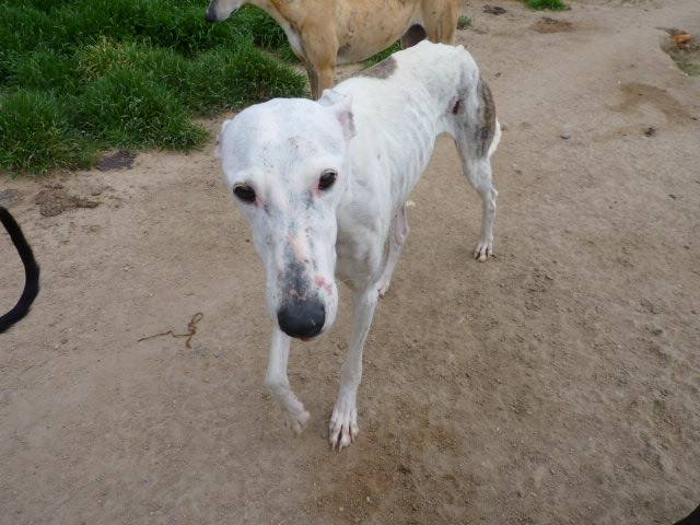 Jacinta 4 ans ,une petite calme et douce Scooby France Adoptée 13226610