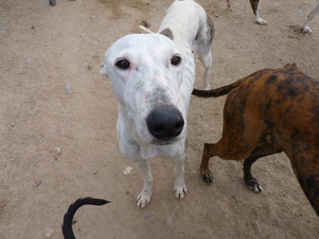 Jacinta 4 ans ,une petite calme et douce Scooby France Adoptée 13227010