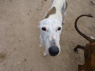 Jacinta 4 ans ,une petite calme et douce Scooby France Adoptée 13240510