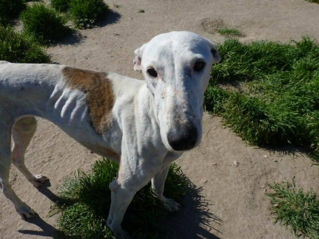 Jacinta 4 ans ,une petite calme et douce Scooby France Adoptée 13254510