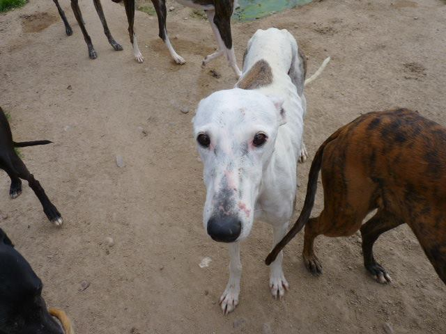 Jacinta 4 ans ,une petite calme et douce Scooby France Adoptée 13256110