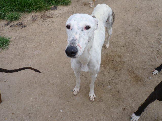Jacinta 4 ans ,une petite calme et douce Scooby France Adoptée 13256311