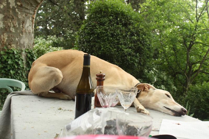 Paella et promenade chez Loupia. 08/05/2016 Img_2712