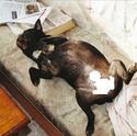 Les photos délires de vos animaux... Monsie10