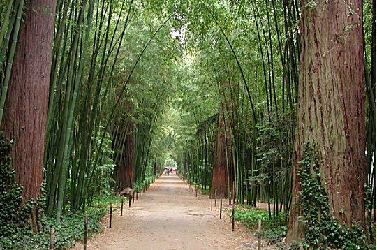 Challenge 71 : Salle des gardes Bambou10