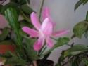 première floraison... Mars_219